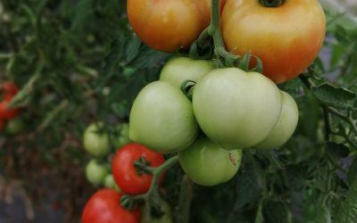 Gemüsekoop