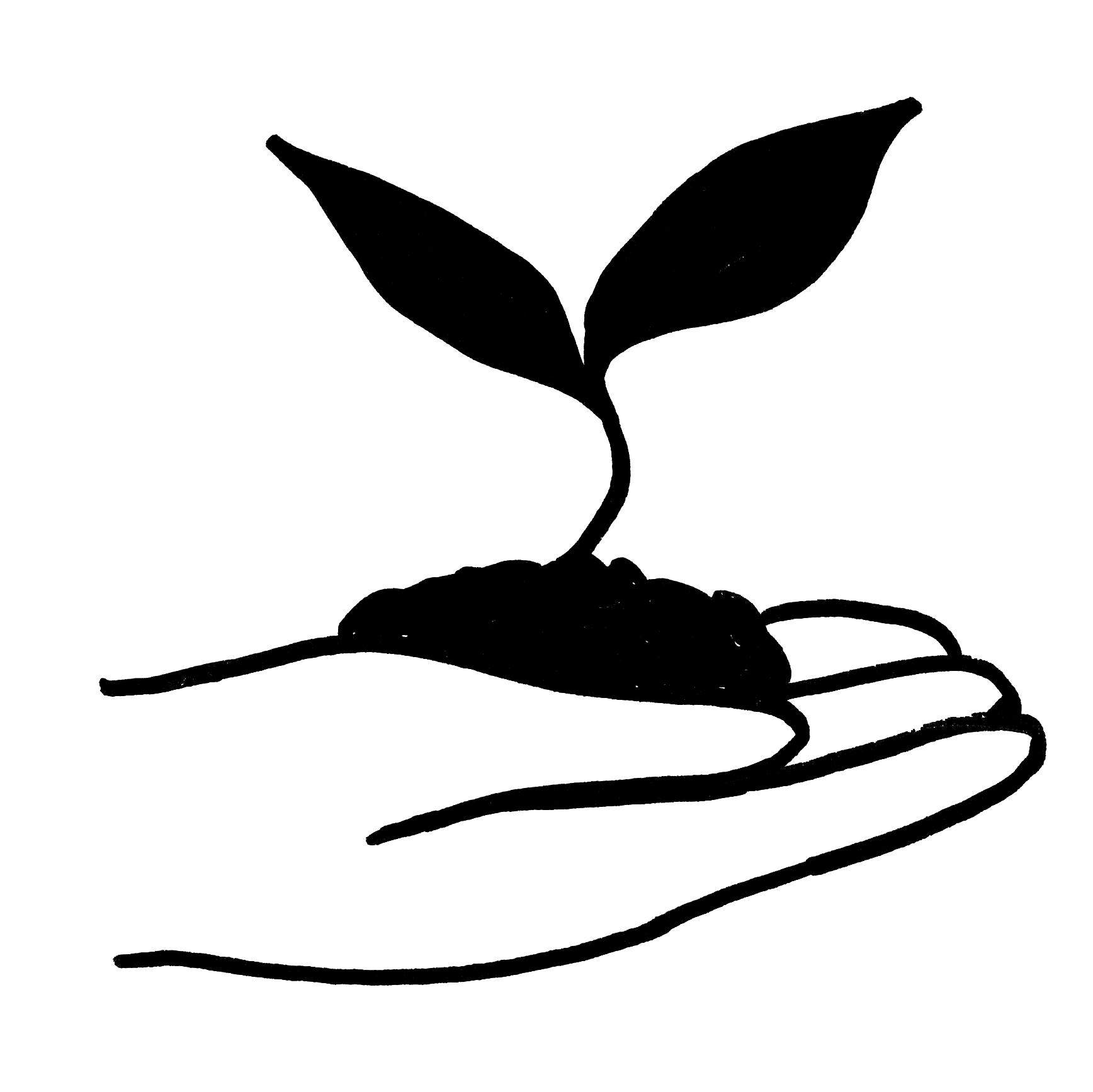 Hand mit junger Pflanze