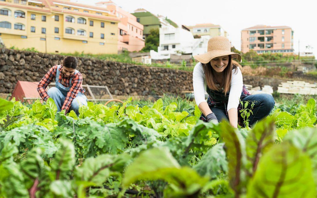 2 Frauen im Gemüsefeld mit Stadt im Hintergrund